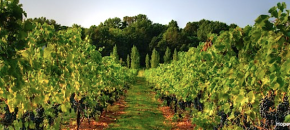 Vineyard Site Assessment Checklist