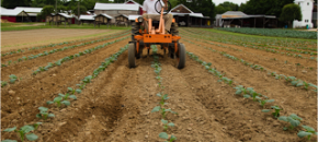 Yield Expectations for Mixed Stand, Small-Scale Agriculture
