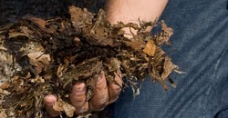 Improving Soils with Leaves and Other Local Organic Wastes