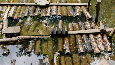 Shiitake-Logs-Submerged-Cold-Water-NYS-2013