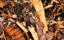 Farm Calls: Growers Ask for Recommendations on <br />Applying Hardwood Chips to Cropland
