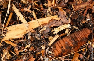Wood-Chips-Cropland-Application