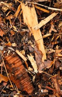 Wood Chips Instead Of Gr on ar wood, no wood, bg wood, my wood, mr wood, ax wood, ms wood, post wood,