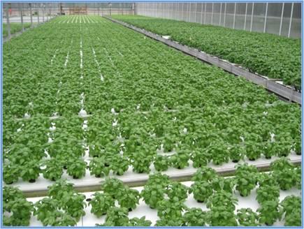Organic+Food