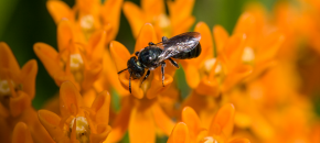 Let Native Pollinators Add To Your Farm's Bottom Line