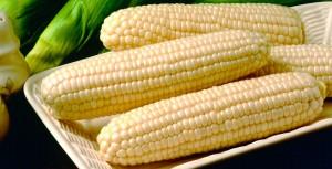 Sweet-Corn-cv-Frosty-Crookham-ID-2011