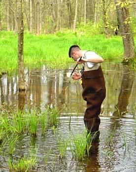 Rainey swamp