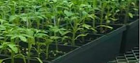 """Farm Calls: A Greenhouse """"Walk of Doom"""""""