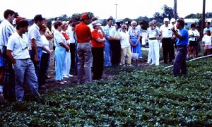 Jim Quarella (right) explaining his Asian vegetable crops to a tour group in the early 1990s. Jack Rabin observes from the far left.