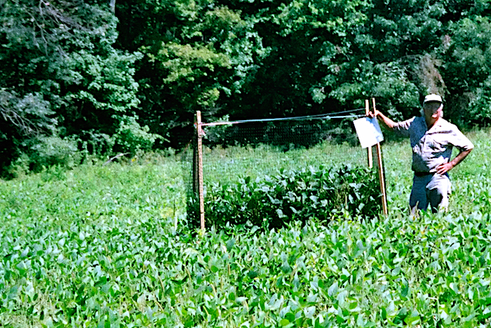 Deer Crop Loss Exclosure in NJ Soybean